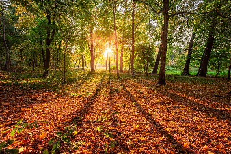 Verbluffende zonsopgang en zonnescherm in het herfstbos, Polen royalty-vrije stock foto