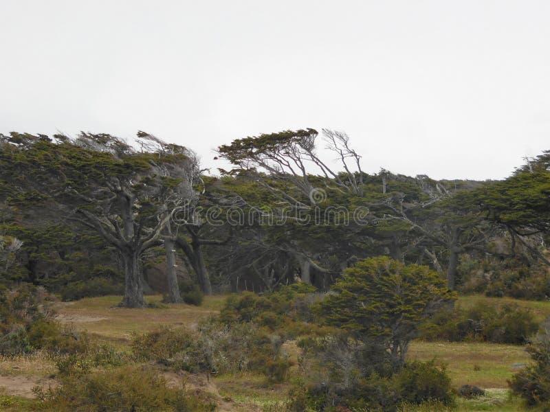 Verbogene Bäume stockbilder