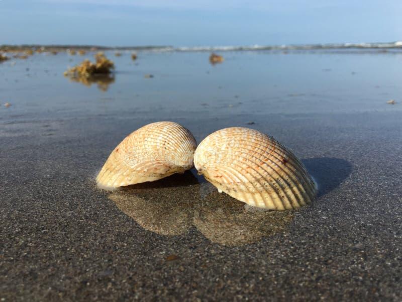 Verbonden shells royalty-vrije stock fotografie