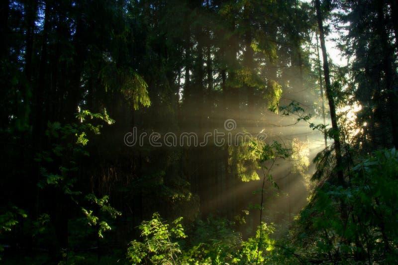 Verborgene Sonne lizenzfreies stockfoto
