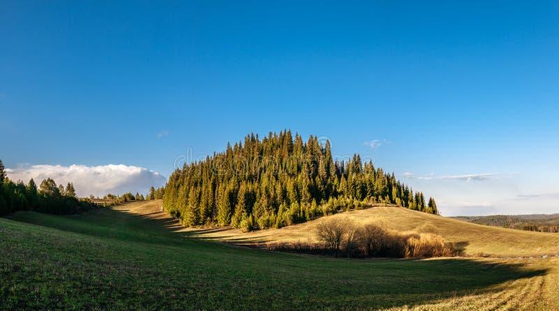 Verboste heuvel tegen een blauwe hemel Lange schuine schaduwen van de staande zon Goudgras op een heuvel stock foto