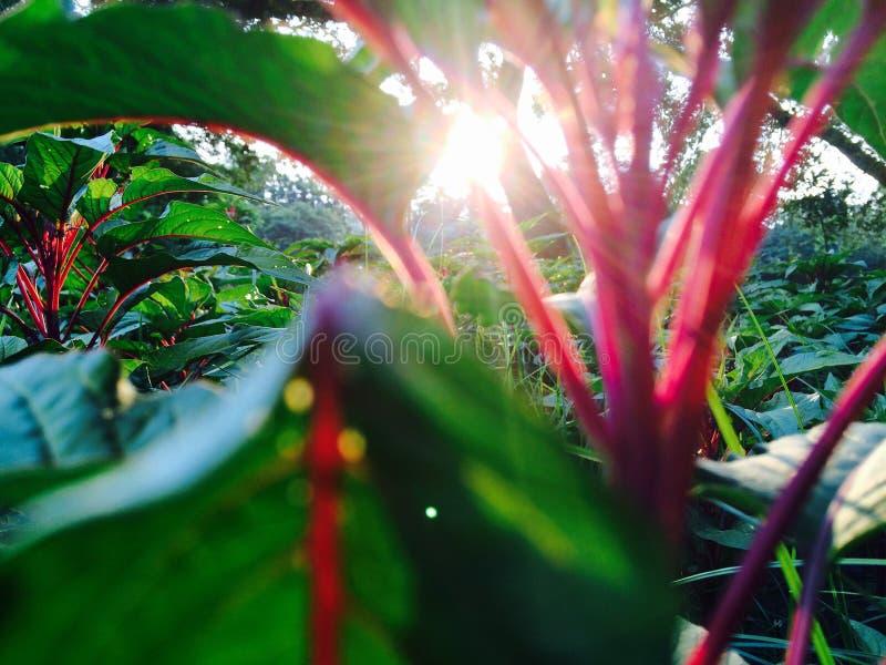 Verdâtre frais naturel de courant de lumière de Sun photos stock