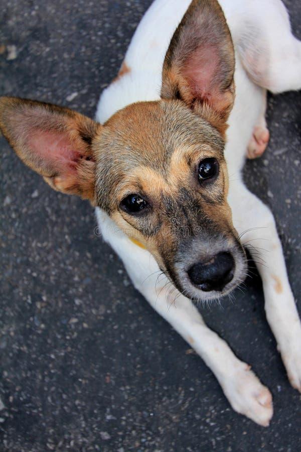 Verdachte hond royalty-vrije stock foto