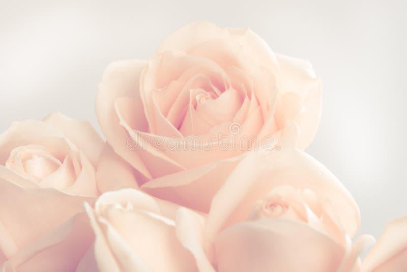 Verdaderas rosas beige suaves como fondo neutral para casarse Imagen entonada fotos de archivo libres de regalías