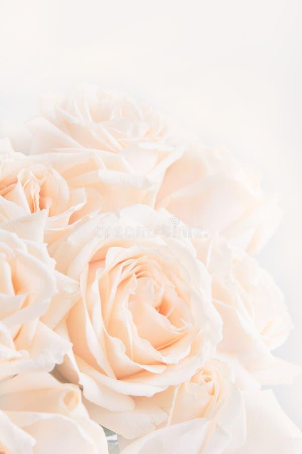 Verdaderas rosas delicadas suaves como fondo neutral Foco selectivo imágenes de archivo libres de regalías