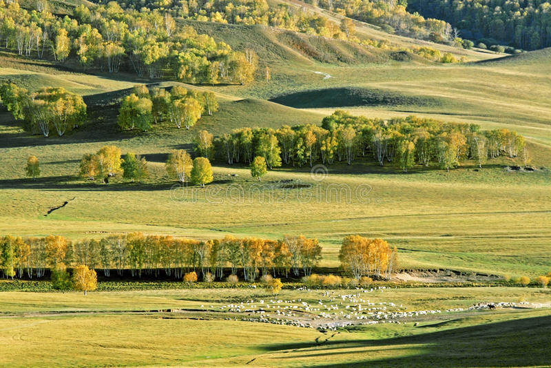 Verdammungs-Herbst in Innere Mongolei stockfotos