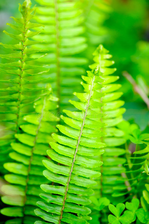 Download Verdant color stock photo. Image of bracken, flora, decorative - 13128002