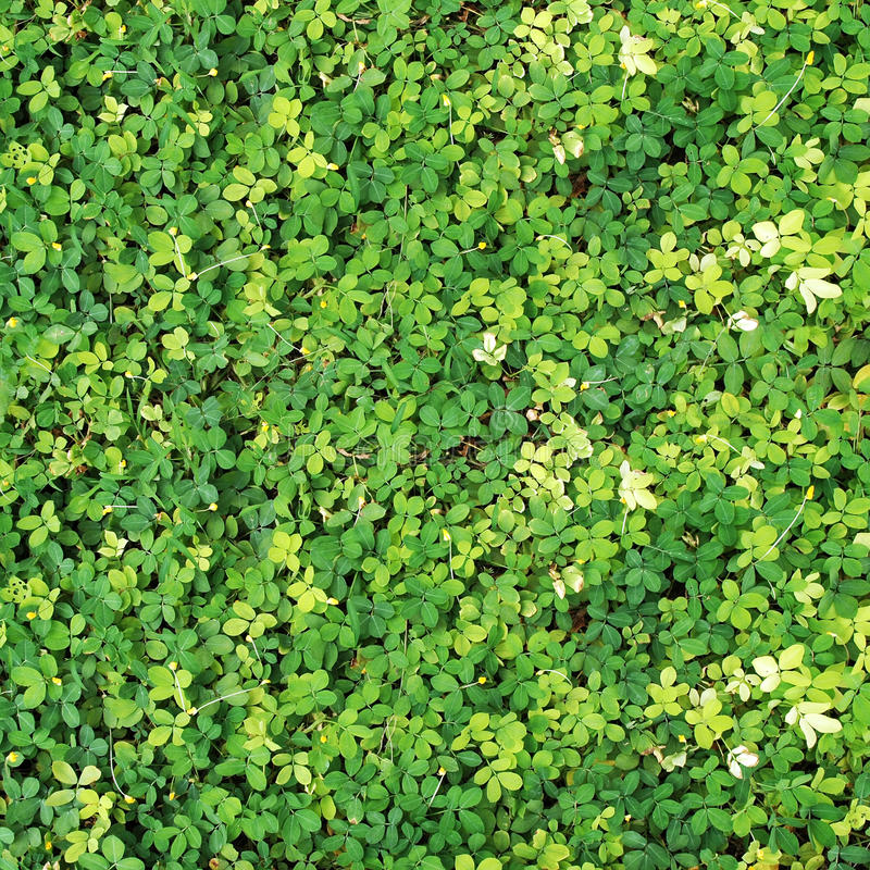Verdant plant background