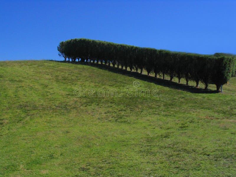 Verde, árvores, e céu azul imagem de stock