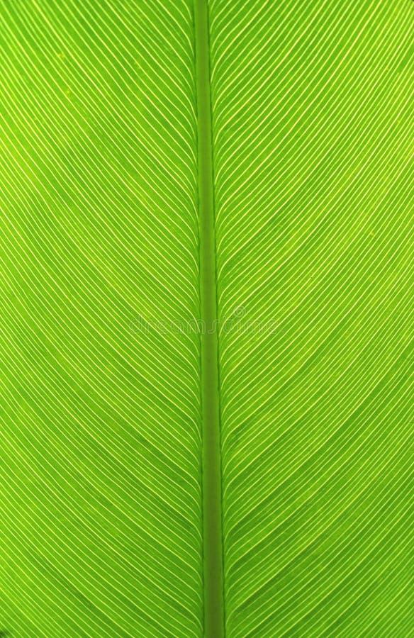 Verde fotografia stock libera da diritti