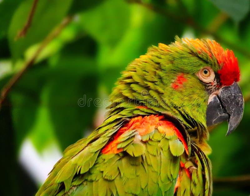 Verde fotografía de archivo