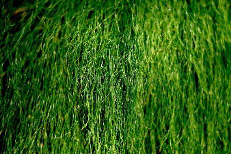 Verde fotos de archivo
