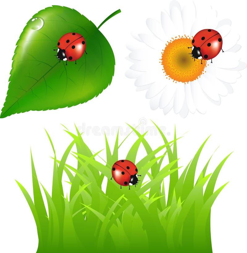 Verde ajustado com Ladybug. Vetor ilustração do vetor