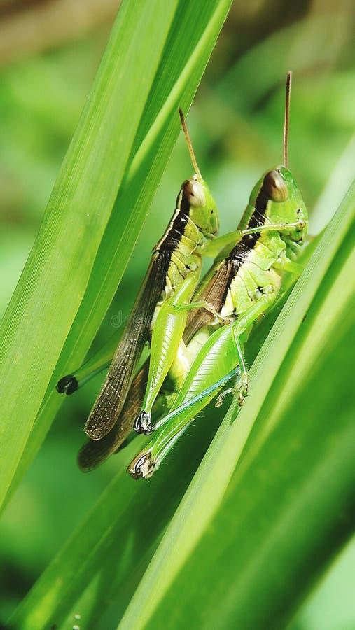 Verde animal que empana foto de archivo libre de regalías