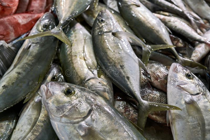 Verde-argento fresco bagnato e pesci rossi che si trovano su a vicenda immagine stock libera da diritti