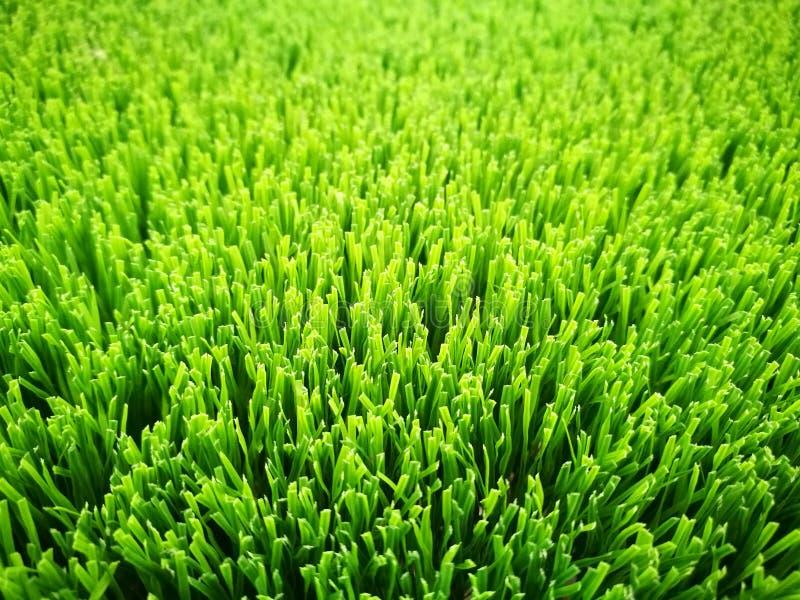 Verde artificial del primer de la hierba imagen de archivo libre de regalías