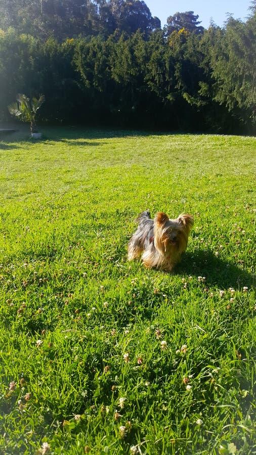 Verde bonito do cachorrinho fotografia de stock