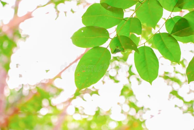 Verde borroso de fondo de la naturaleza imagen de archivo