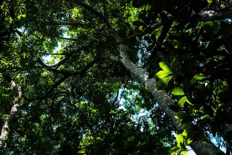 Verde claro y los árboles en el bosque fotos de archivo libres de regalías