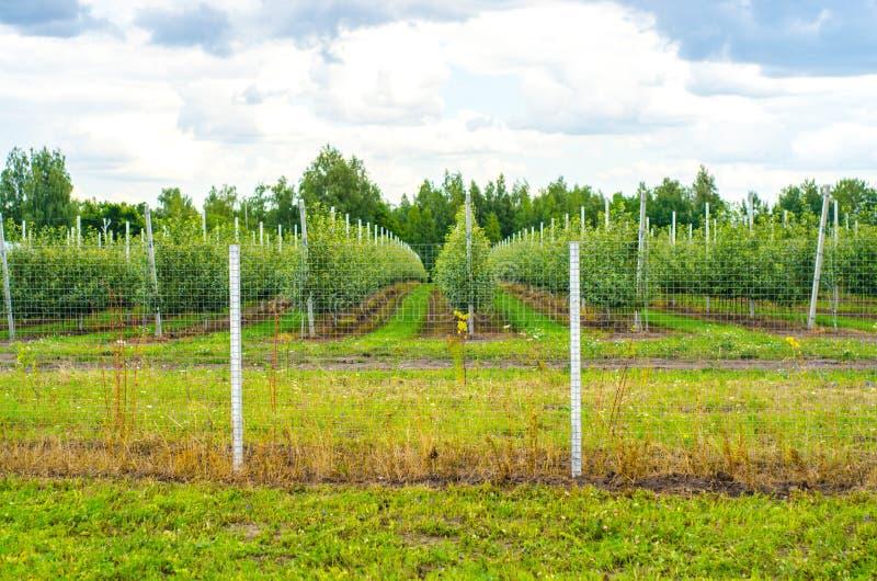 Verde commerciale di affari della mela del giardino immagini stock libere da diritti
