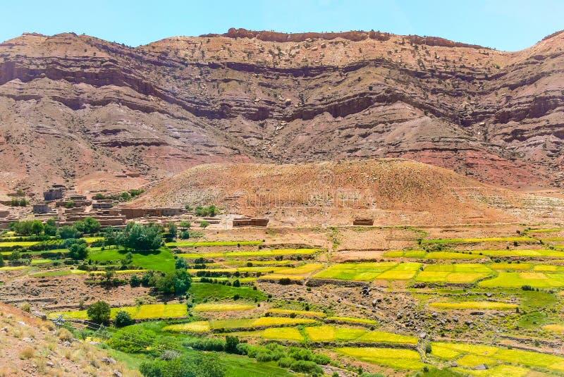 Verde contra marrón en la tierra seca de Marruecos imagen de archivo