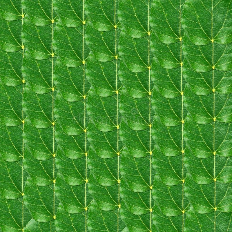 Verde da amora deixa fundo foto de stock royalty free