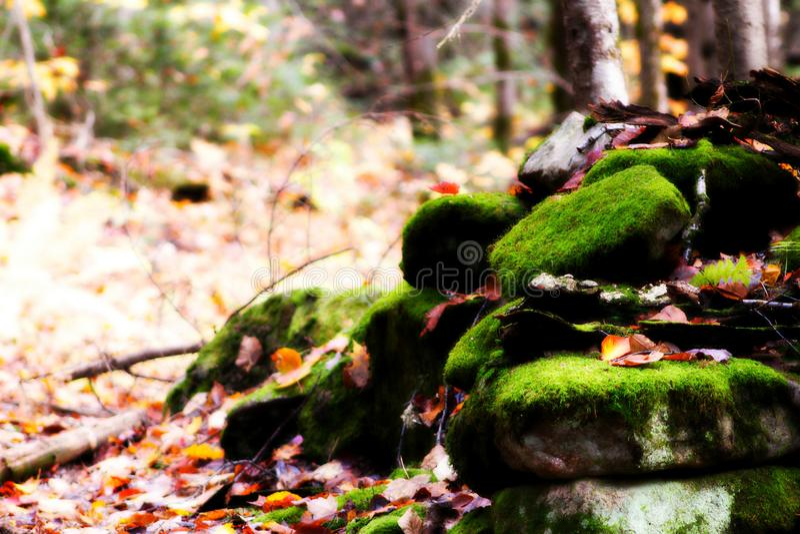 Verde da natureza foto de stock
