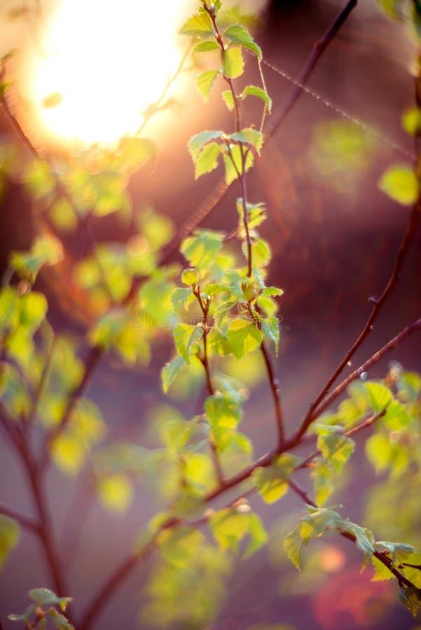 Verde da natureza do alargamento da lente imagem de stock royalty free