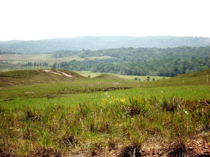 verde da Venezuela de amazon do savana do parque da paisagem grande fotos de stock royalty free