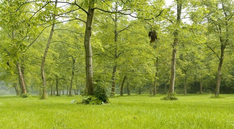 Verde de floresta imagem de stock royalty free