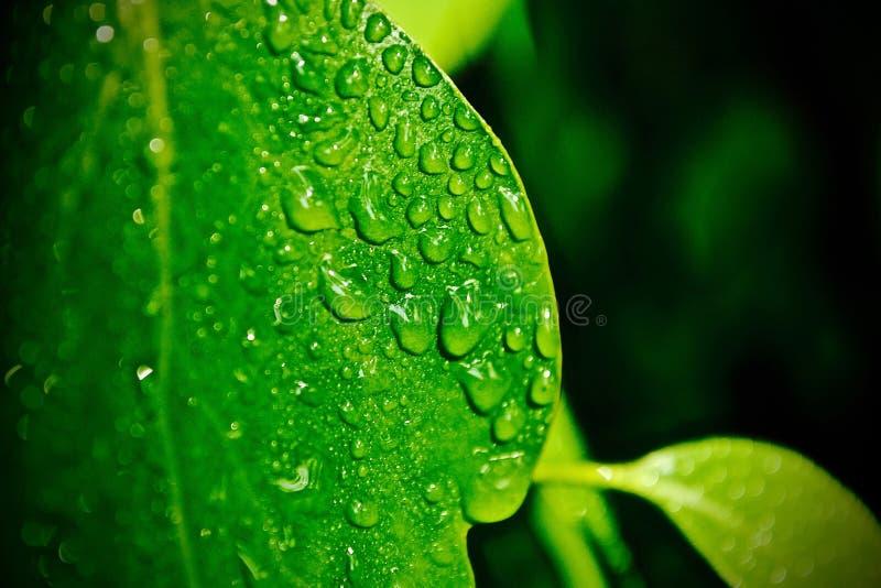 Verde de goteo fotos de archivo