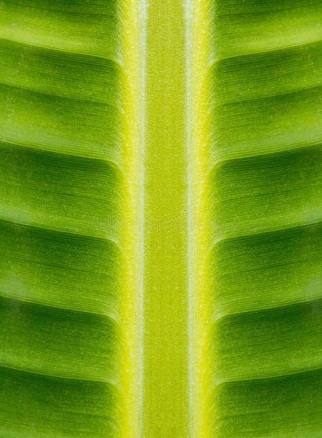 Verde de Hoja fotografia de stock