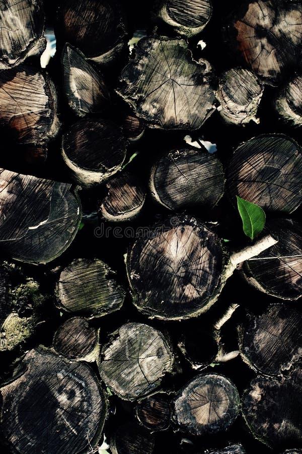 Verde de lãs foto de stock