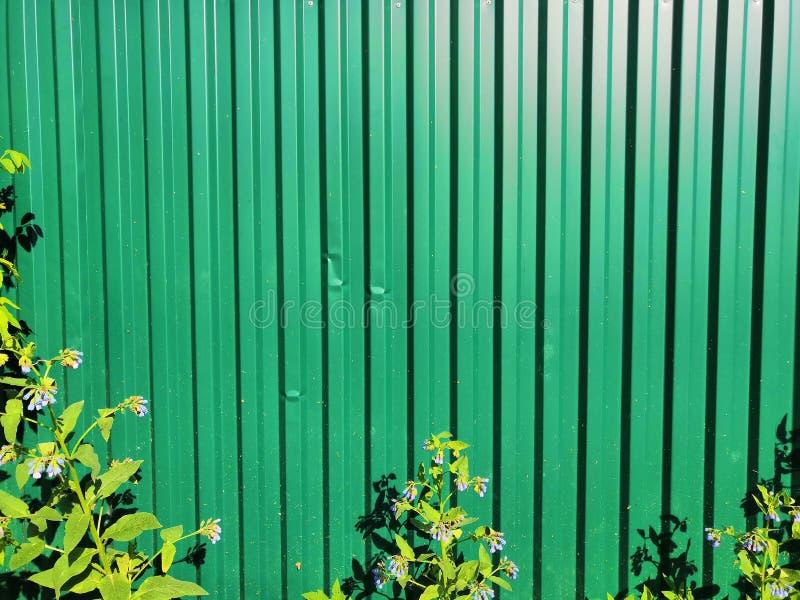 Verde de la cerca púrpura del metal y de las flores blancas y de las hojas fotografía de archivo