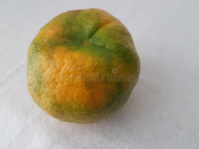 Verde de la mandarina en Atibaia en Sao Paulo en el Brasil imagenes de archivo