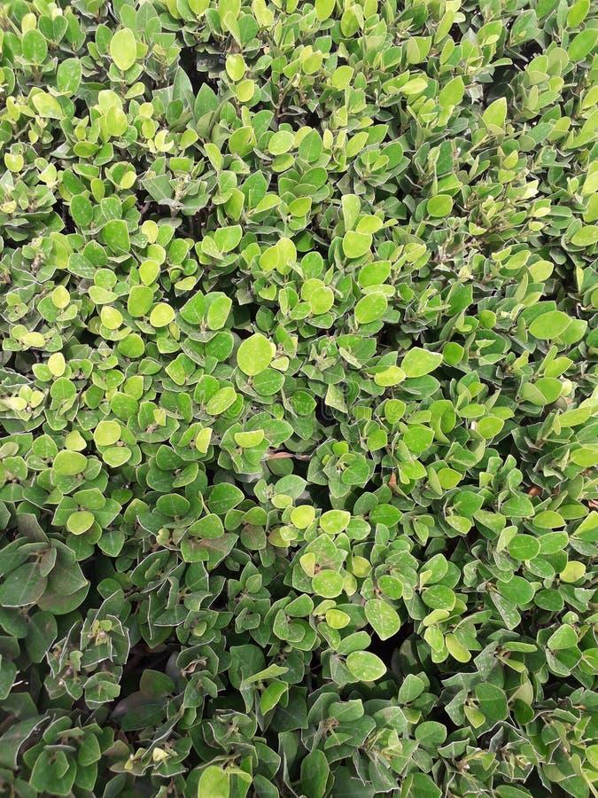 Verde de la naturaleza y árbol hermoso imagen de archivo