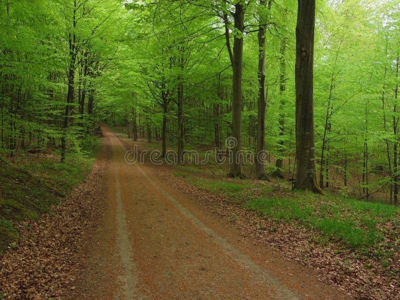 Verde de la primavera fotografía de archivo