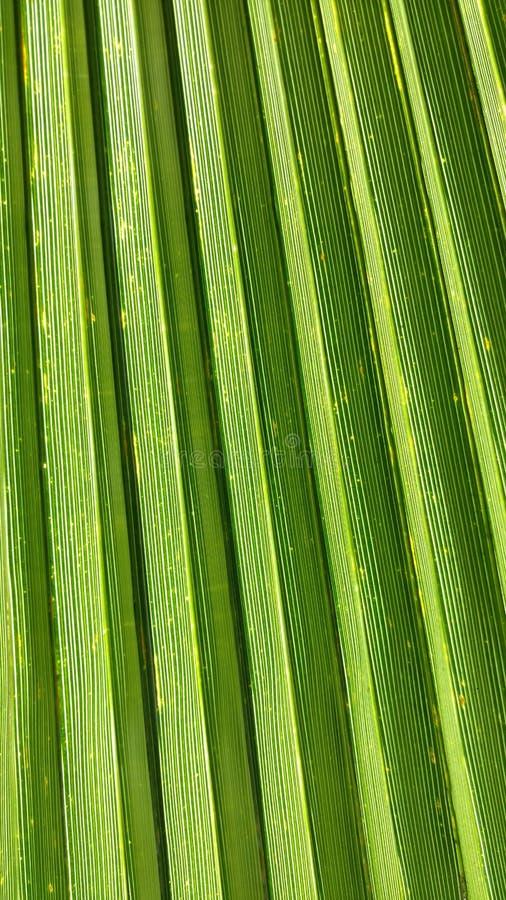 verde de la textura fotos de archivo
