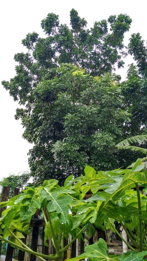 Verde de los árboles maravillosamente imagen de archivo libre de regalías