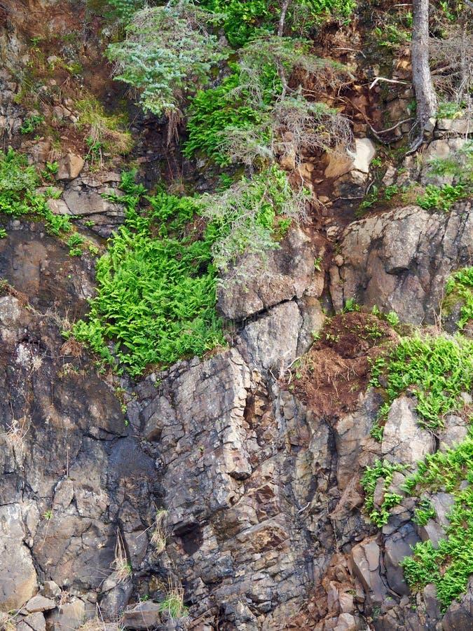Verde de Rockface imagen de archivo libre de regalías
