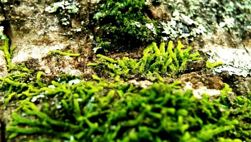 Verde de tierra trasero imágenes de archivo libres de regalías