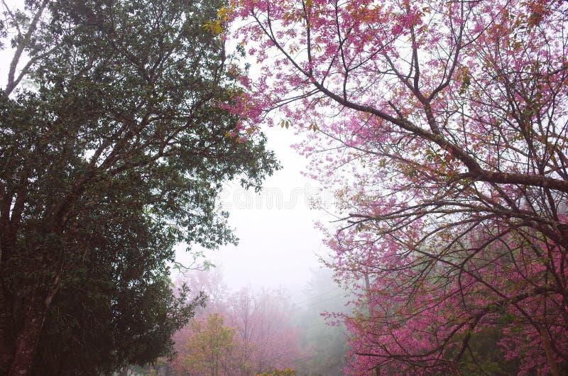 Verde del árbol del tono de la escena dos del invierno y rosado en el bosque fotos de archivo