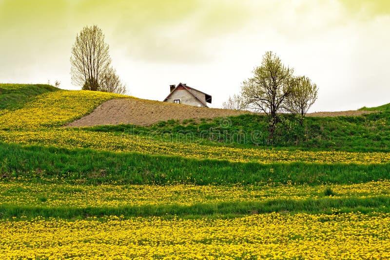 Download Verde del campo fotografia stock. Immagine di prato, pianura - 7301536