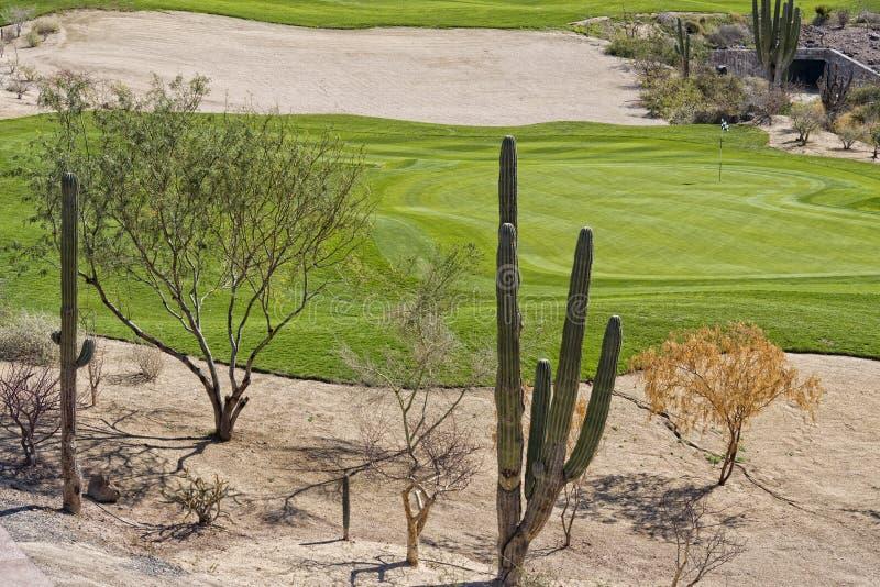 Verde del campo da golf del deserto immagini stock libere da diritti