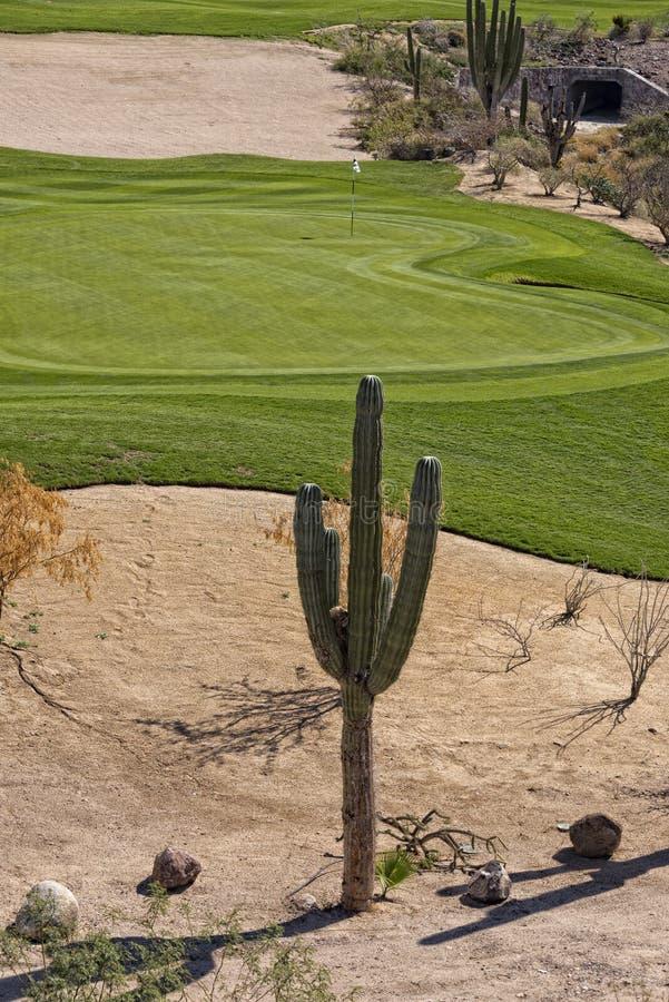 Verde del campo da golf del deserto immagini stock