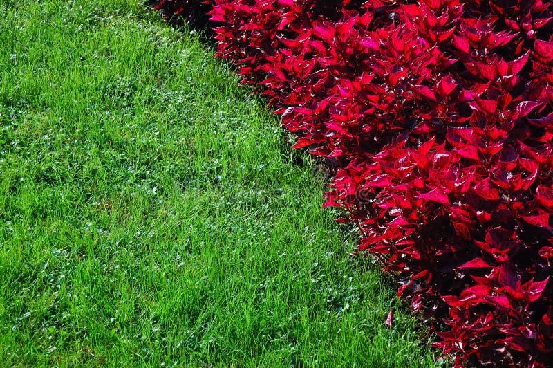 verde del fiore fotografia stock