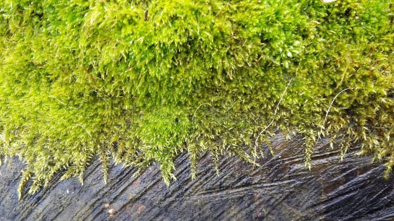 Verde del legno fotografia stock