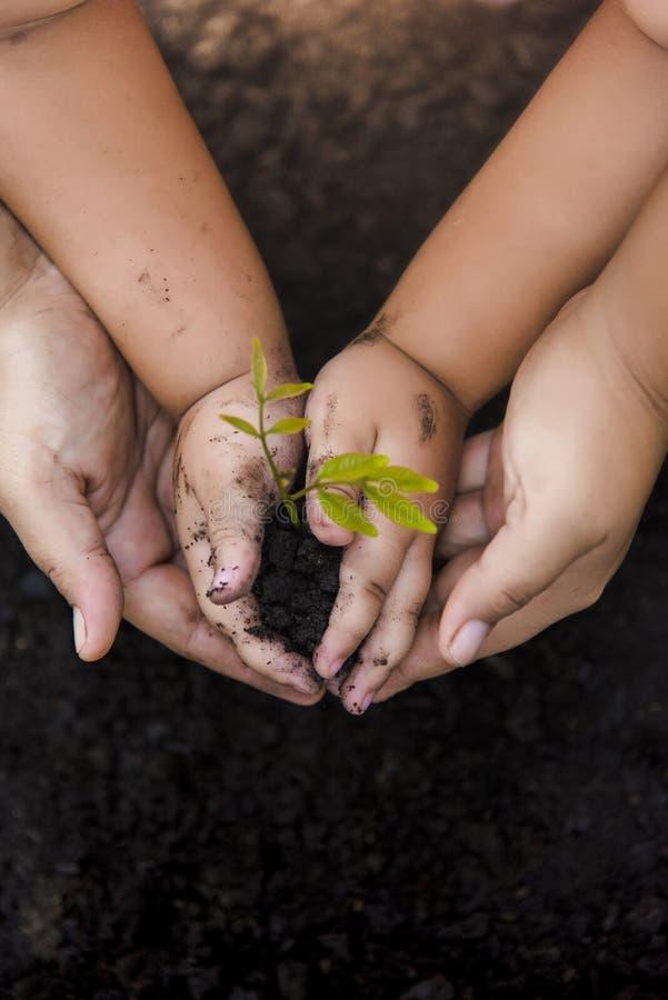 Verde verde del mondo di piantagione di alberi Alberi con soldi, soldi di risparmio e le mani crescenti fotografia stock libera da diritti