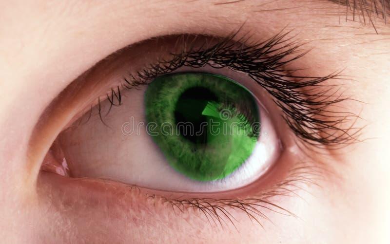 verde del ojo humano fotografía de archivo libre de regalías