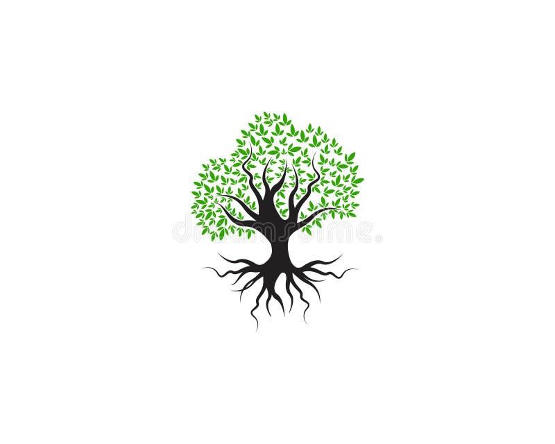 Verde del vector de la naturaleza del elemento de la ecología del logotipo de la hoja del árbol libre illustration